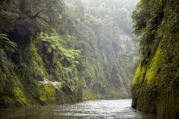 Canyon Walls of the Whanganui RIver